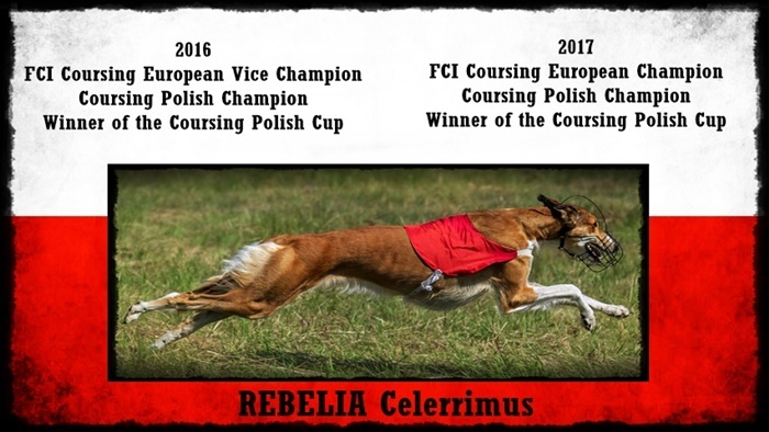 REBELIA Celerrimus Coursing Champion
